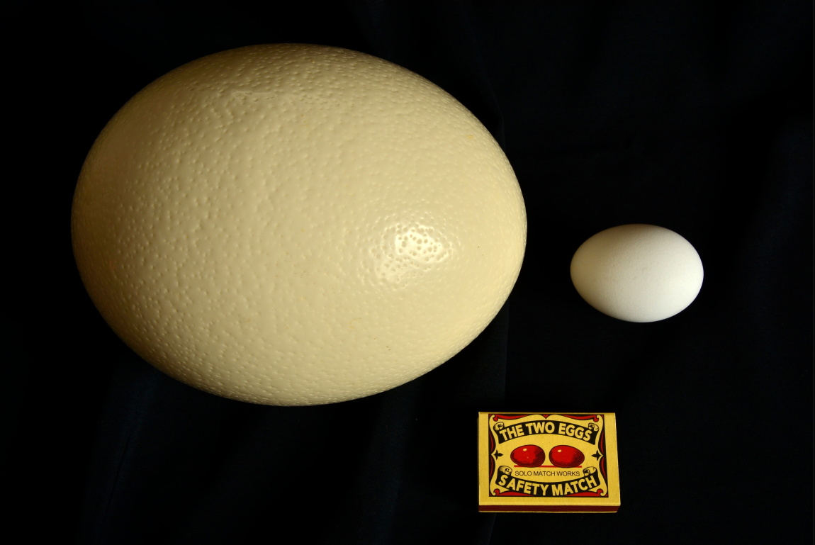 THE TWO EGGS